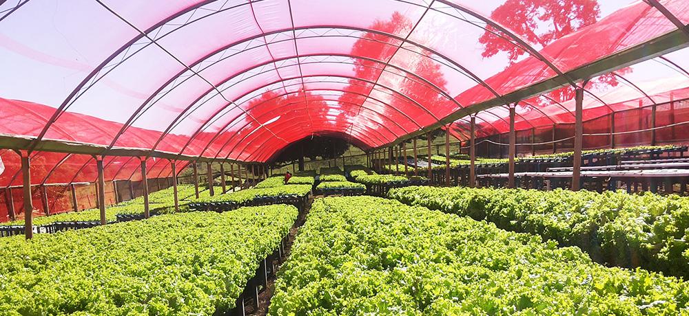 Greenhouse Shading Nets Ginegar
