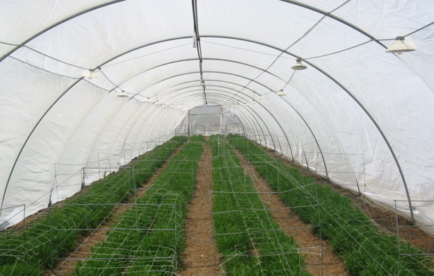 Anti-Insect (polysack) Nets - Ginegar